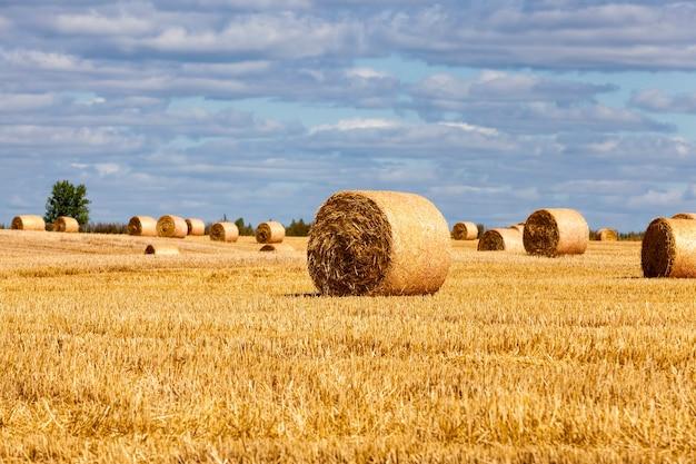 밀 수확 후 밀짚 더미가 남았습니다.