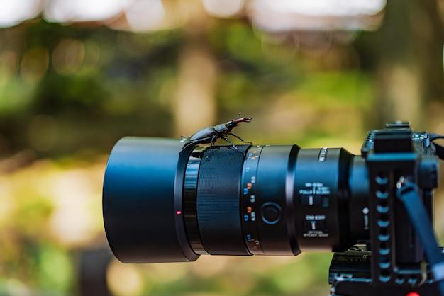 Жук-олень сидит на объективе камеры