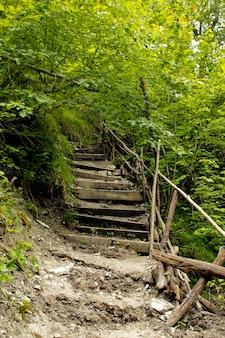 貯水池の隣の自然の荒野の階段