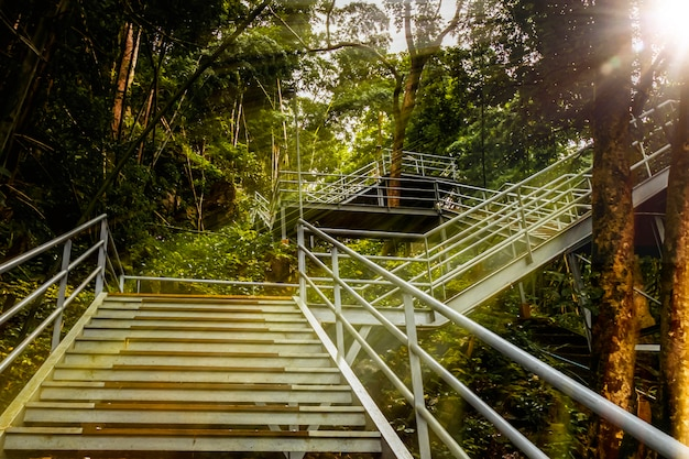 The stairs up to the top of hills  trail and  forest, thailand.