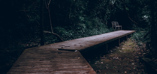 Stairs walking in the forest thailand cinematic dark style