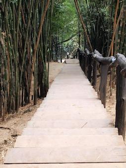 정글의 계단