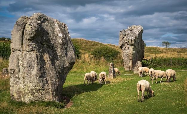 エイヴベリーのサークルから立っている石。巨大な岩の間で羊が放牧しているのを見ることができます