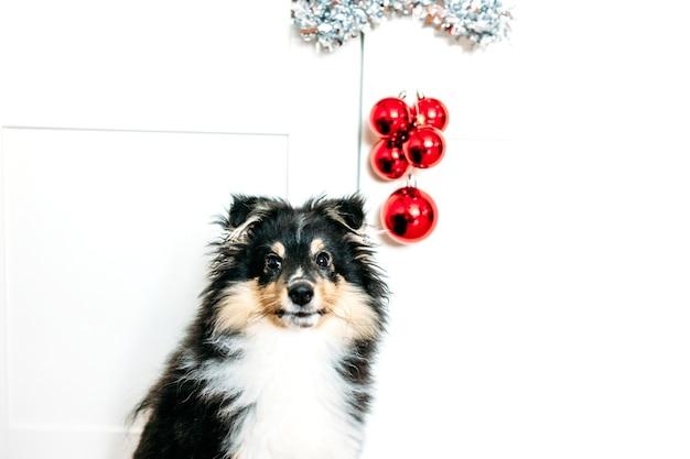 Звезда и шары красный домашний декор укореняется на новый год и рождество, фон, блестящий, щенок сидит
