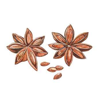 スターアニスの植物が分離されました。料理と癒しの植物スターアニスの水彩画ボタニカルイラスト。