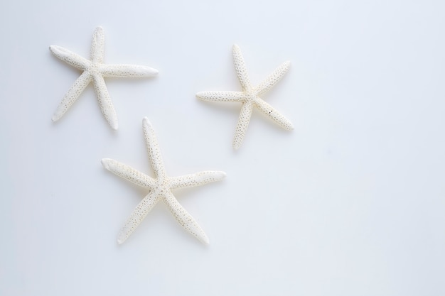 Star fish on white background