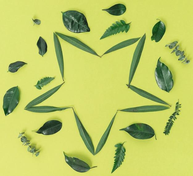 Foglie verdi a forma di stella