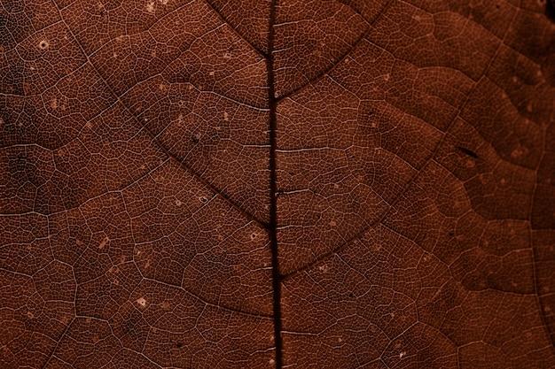 Звезды крыжовника лист текстуры макрос фон