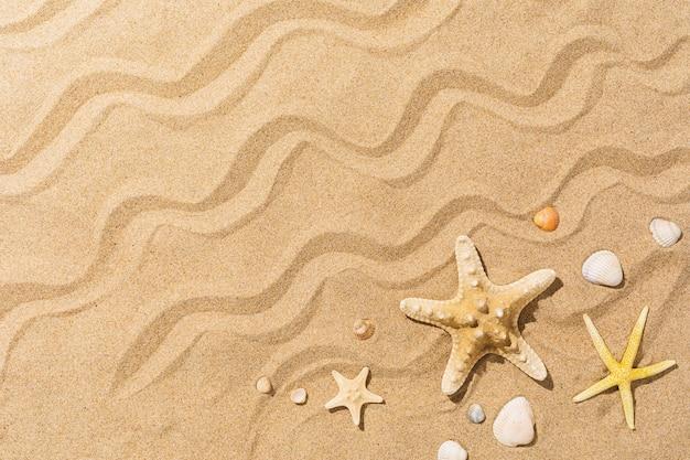 Морские звезды и другие ракушки на песке с копией космического летнего фона