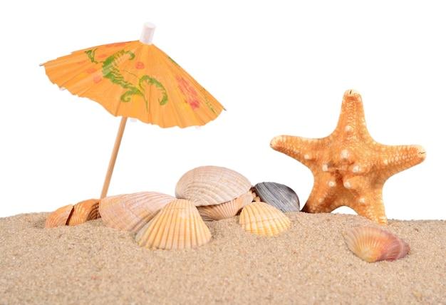 흰색 바탕에 해변 모래에 불가사리와 조개