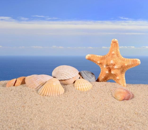 바다를 배경으로 해변 모래에 있는 불가사리와 조개