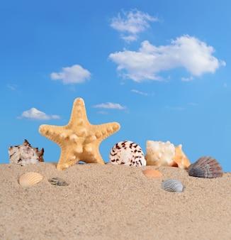 푸른 하늘을 배경으로 해변 모래에 있는 불가사리와 조개