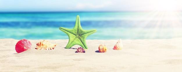 화창한 해변에 불가사리와 조개입니다. 여름 휴가 배경