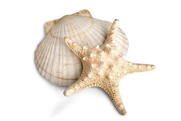 Морская звезда и раковина, изолированные на белом фоне