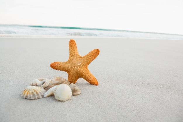 Морская звезда и ракушки на песке