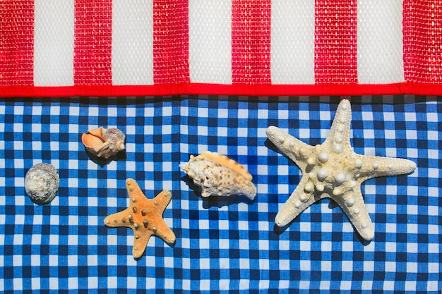 縞模様と市松模様の色とりどりの表面のヒトデと貝殻