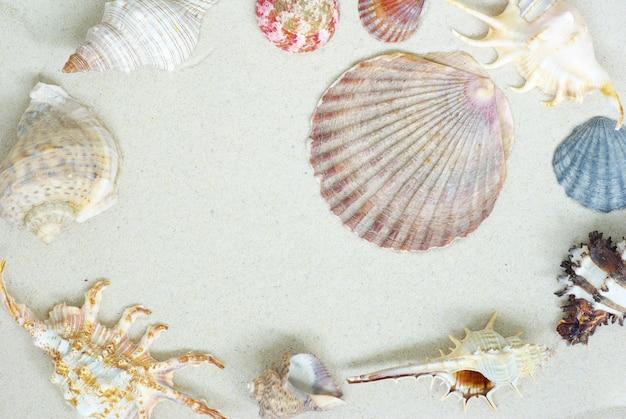 ビーチのヒトデと貝殻