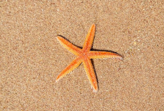Starfish on the beach on the sand