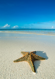 Starfish on the beach. sea