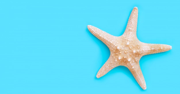Starfish on blue background.  copy space
