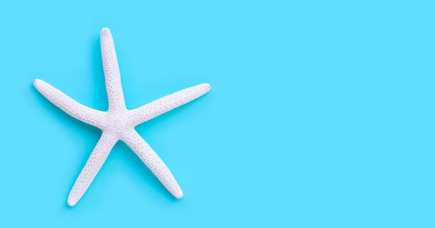 Starfish on blue background.