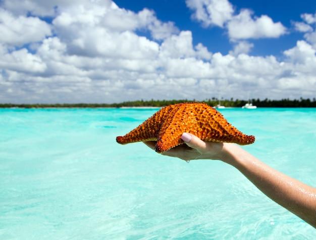 Морская звезда в руке в море
