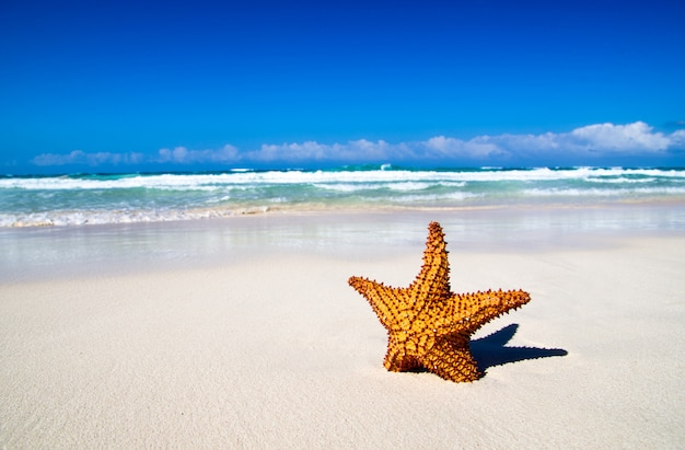 Морская звезда на песчаном пляже