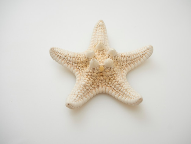 Starfish isolated on white background with contours, space for texting, top view