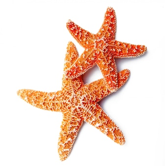 Starfish isolated