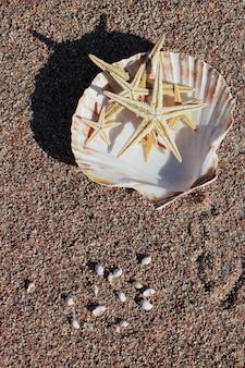 불가사리는 해변의 모래에 조개에 누워 있습니다.