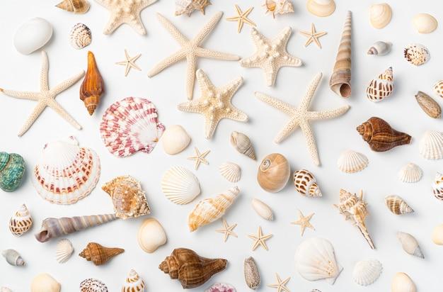 На светлой стене в случайном порядке разложены морские звезды разных видов и большой ассортимент ракушек. горизонтальный вид.