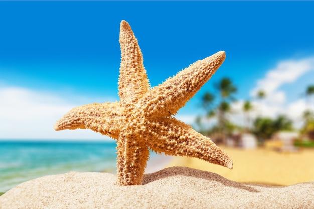 해변 모래에 불가사리입니다. 확대