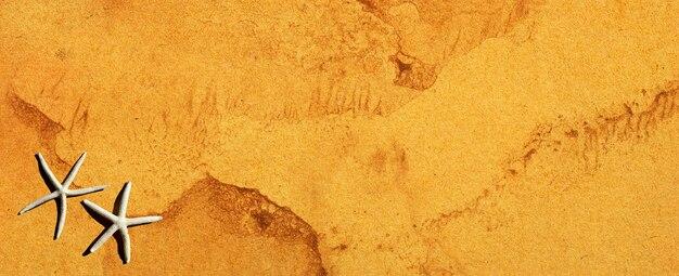 Морская звезда на коричневой бумаге