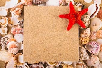 Starfish on pin board and seashells