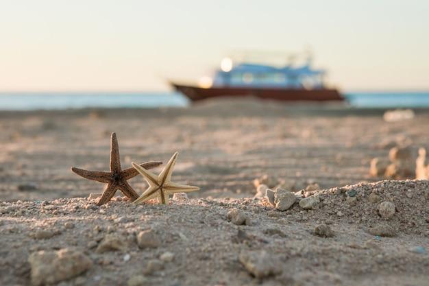 Морская звезда на пляже красного моря летние каникулы тропическая природа морской пейзаж концепция для открытки или туристического агентства с копией пространства