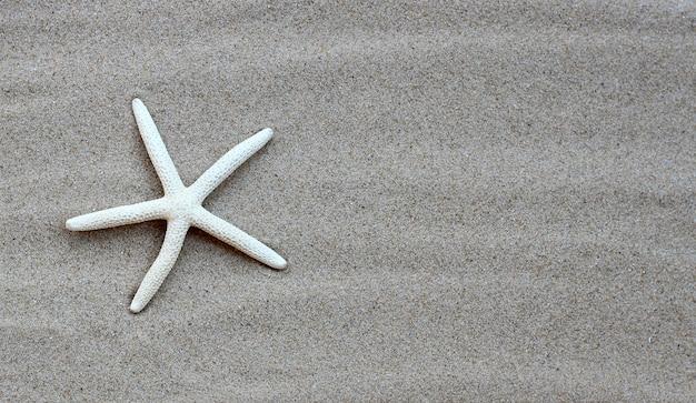 Морская звезда на песке. летний фон концепция