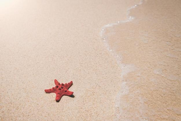 海砂浜のヒトデ