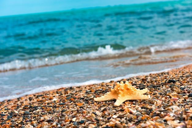 Морская звезда на берегу моря летняя тема