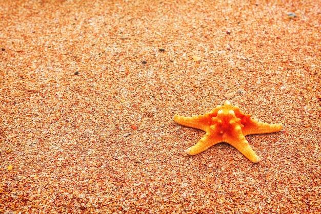 海岸の夏のテーマのヒトデ