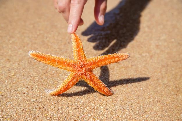 남자의 손에 해변에 불가사리. 선택적 초점입니다. 자연.