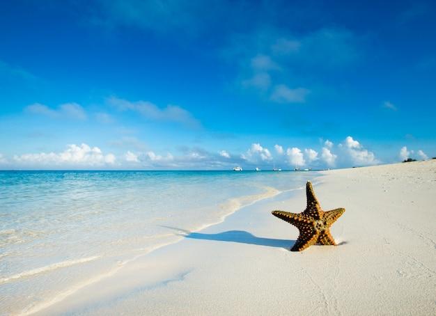 Морская звезда на пляже. море