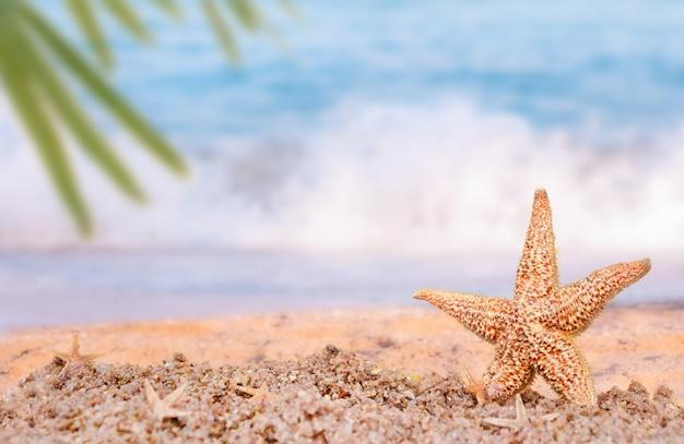 Морские звезды на песке на фоне моря и пальмовых листьев. концепция отпуска