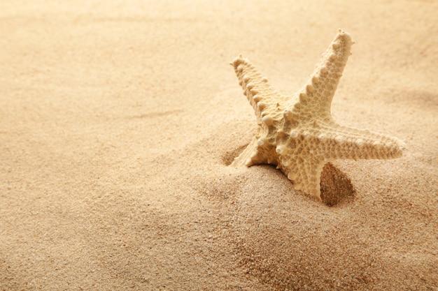 Морская звезда на песке, летнее время. вид сверху