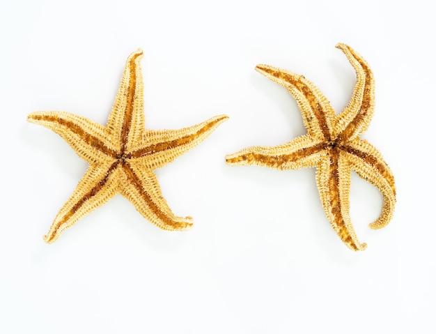 흰색 바탕에 불가사리 또는 바다 별