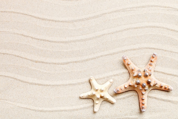 Starfish and palm leaves lying on the sea sand