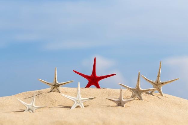 태국의 모래 해변에서 쉬고 있는 불가사리.