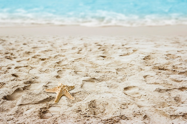Starfish on sand at the beach