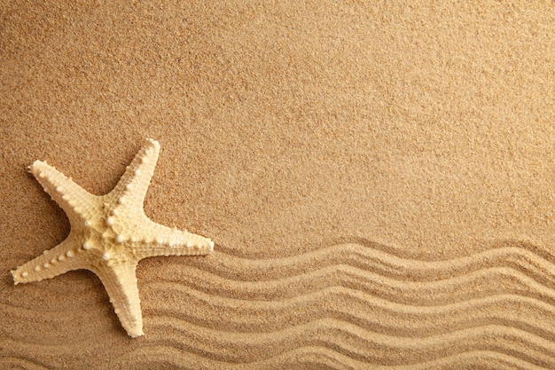 Starfish on the sand, summertime. top view