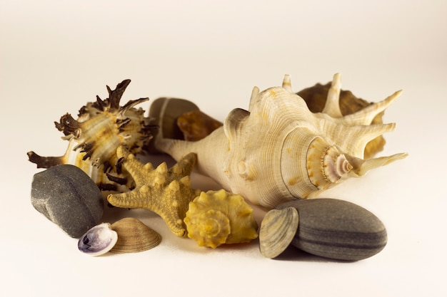 불가사리, 조개 및 흰색 바탕에 돌입니다. 여행 개념입니다. 디자인, 바다.