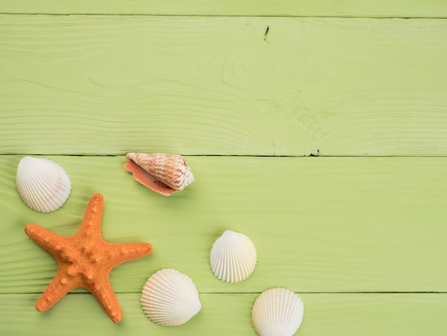 Starfish and seashells lie on green boards, top view, copy space.